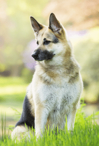 Vervolg training hond