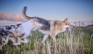 Honden gras hier rennen lucht